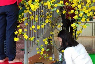 Hình ảnh trang trí chủ đề tết và mùa xuân
